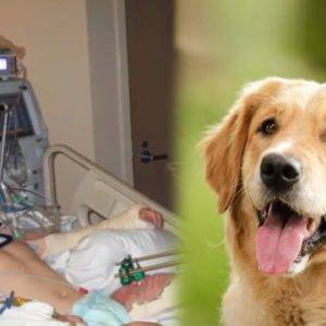 The boy could remain disabled after an accident, but thanks to the dog, a real miracle happened